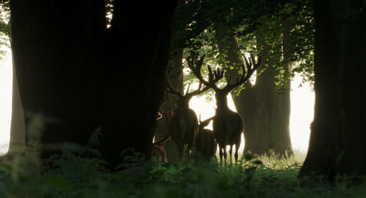 Auf Der Jagd Wem Gehört Die Natur Kino